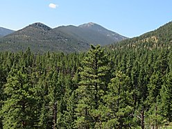 land, for sale, wolf creek, montana, state land, cabin, views, woods creek valley, hunt, scapegoat,  for sale