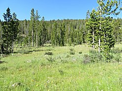 land, acres, for sale, national forest, beaverhead deerlodge national forest, cabin, montana, views, for sale