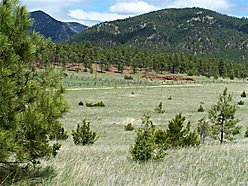 land, for sale, acres, montana, national forest, year round access, wildlife, hauser lake, power,  for sale