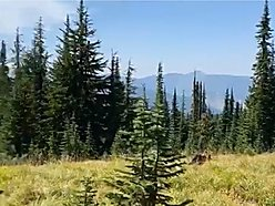 acreage for sale, national forest, spokane, washington, lookout pass, lolo national forest, idaho, for sale