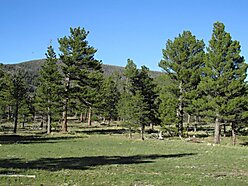land, for sale, wolf creek, montana, blm land, wildlife, state land, blackfoot river, off grid,  for sale