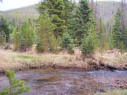 acres, creek, national forest, montana land for sale, deeded, mountain property, alternative energy, recreational, year-round creek, deer, elk, bear, cabin, wildlife, montana,