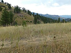 lot, for sale, cascade, montana, wildlife, cabin, hunt, blm land, building spots, dearborn river,  for sale