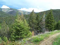 montana mountain property, year round, continental divide, cabin, elk, deer, moose, national forest, bob marshall wilderness, hunting, lincoln montana, elk meadows,