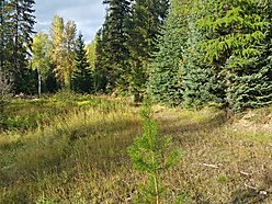 superior mt, for sale, acres, look out ski pass, atv, snowmobile, home, wildlife, lakes, for sale