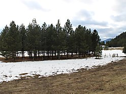 land, for sale, acres, st. regis, montana, wildlife, elk, hunt, hike, lolo hot springs, views,  for sale