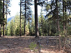 off grid, for sale, land, camping spots, lolo national forest, usfs land, st. regis, montana, hunt,  for sale