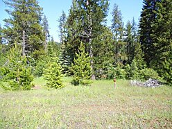 lots for sale, western Montana, Deborgia, meadow, trees, wildlife, Lookout 