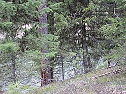 building, lot, for sale, golf course, fishing, wildlife, clark, fork, river, st, regis, mt,  for sale