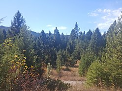 land, for sale, st. regis, montana, usfs land, clark fork river, river access, cabin, well, atv,  for sale