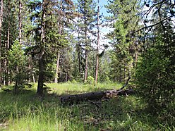 land, for sale, st. regis, montana, wildlife, recreation, lolo hot spring, snake river, trout creek, for sale